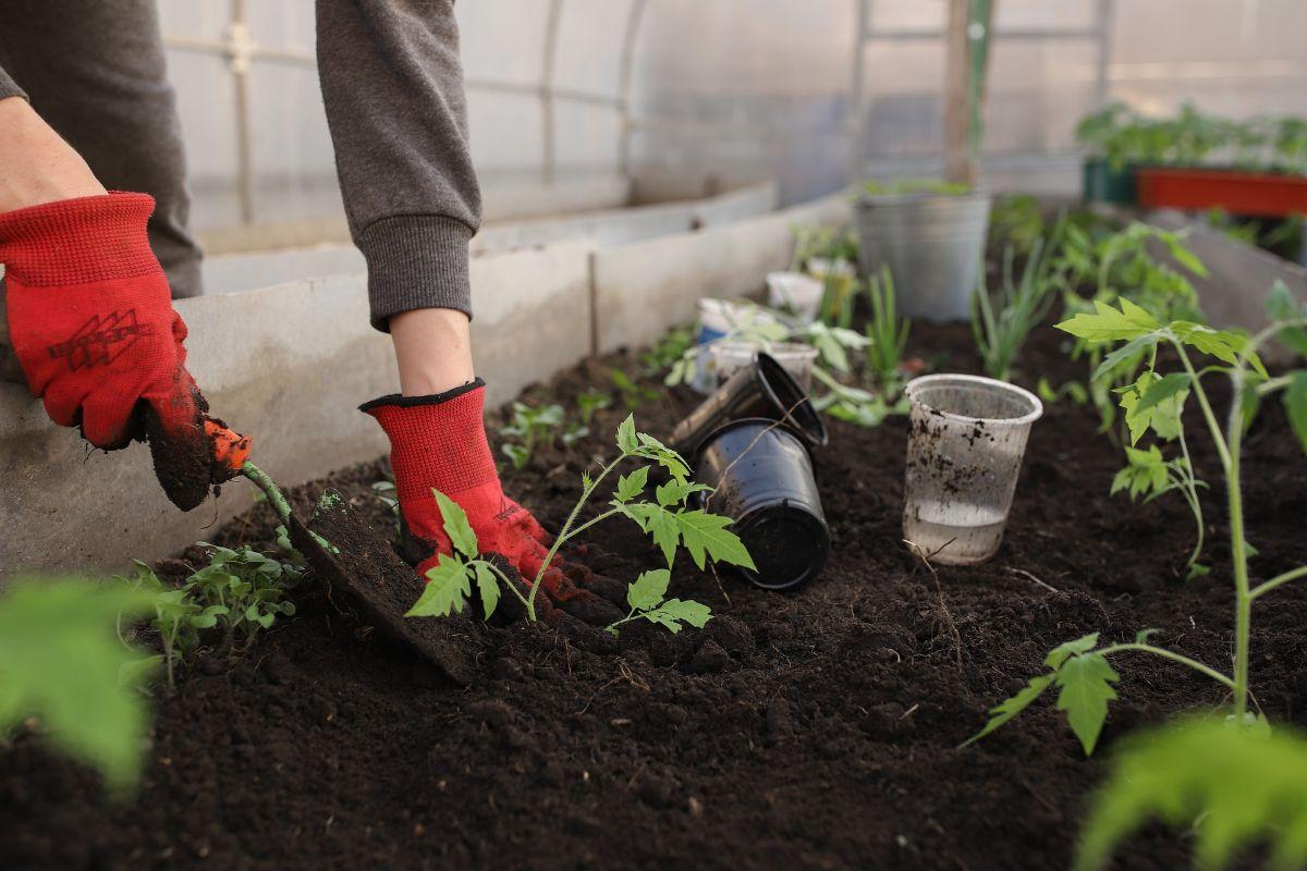 Cómo ahorrar dinero en el jardín