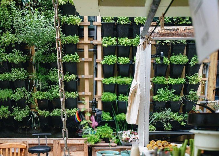 aprovechar el espacio para sembrar