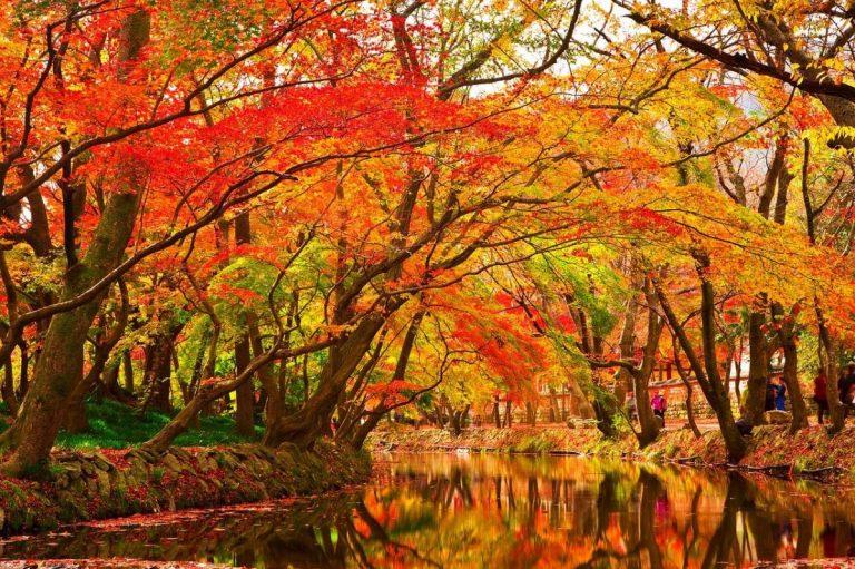 Hay muchos árboles bonitos en otoño