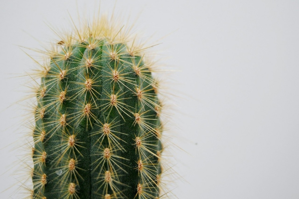 Los cactus se riegan poco en invierno