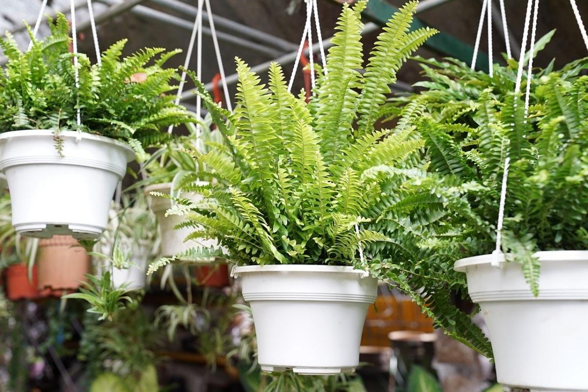 Los helechos son plantas que se pueden tener en interior