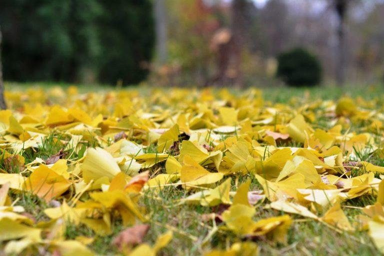 Las hojas secas tienen varias utilidades