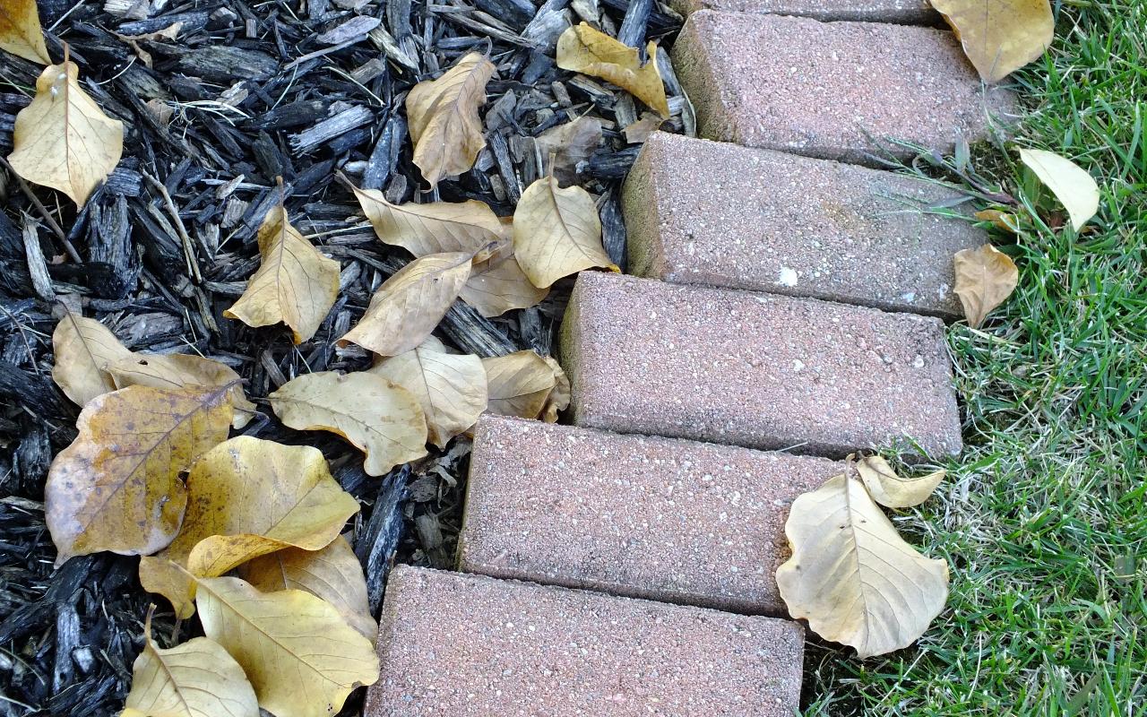 Las hojas secas pueden ser un abono