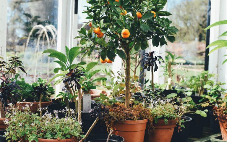 El jardín interior puede estar lleno de plantas