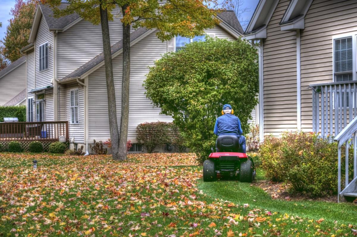 Las hojas de otoño se pueden usar como abono