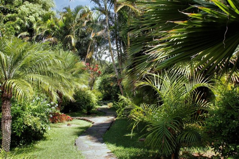 Se pueden tener muchas palmeras en un jardín tropical en España