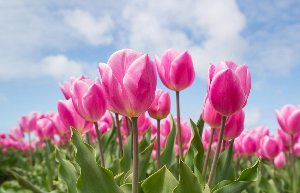 Según la especie hay que plantar bulbos en otoño o en primavera