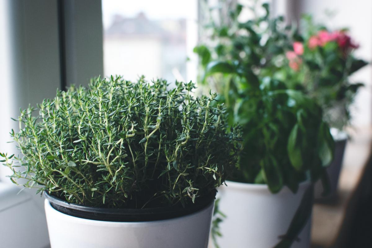 Las aromáticas son plantas que huelen bien