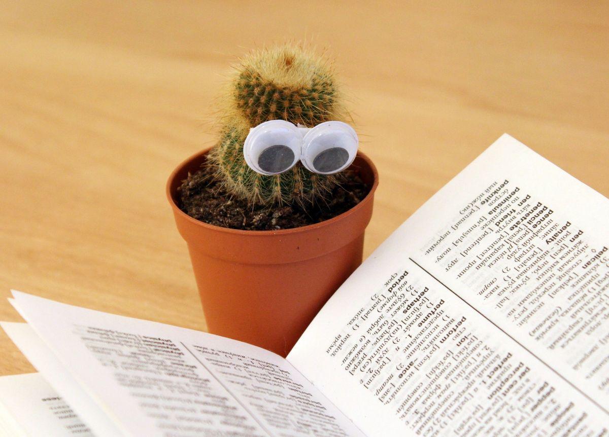 El riego de los cactus mini